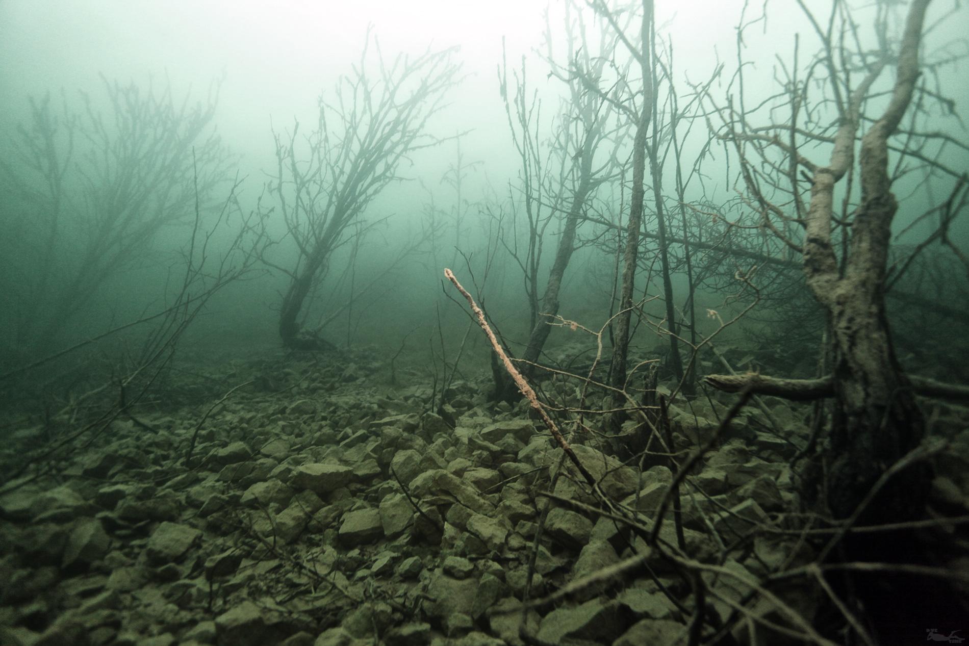 Подводный лес в Бокситогорске